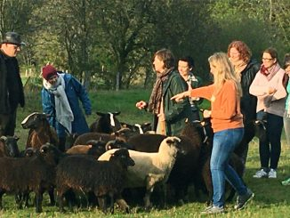 schapendrijven-ardennen-grandmenil